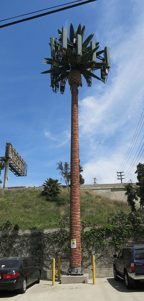 Cell tower palm tree