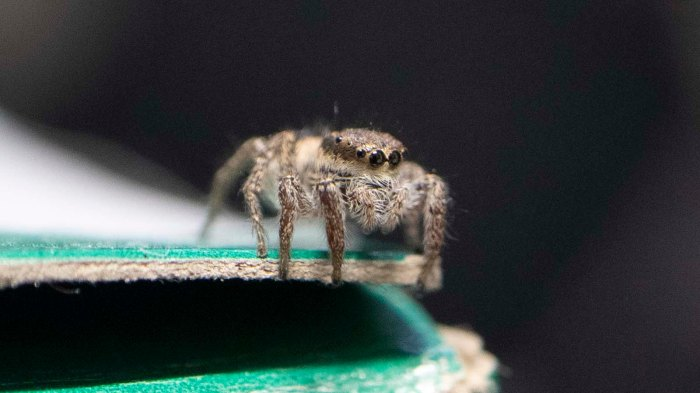 Spider on McMaster Carr box